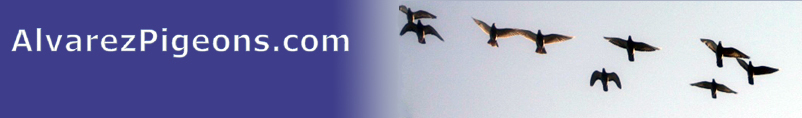 welcome to AlvarezPigeons.com